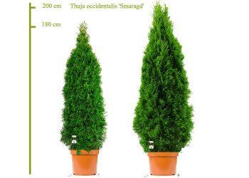 180- 200 smaragd